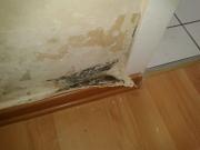 Капитальный ремонт квартир. После затопления квартиры, на стенах образуется плесень. Перед ремонтом необходимо провести мероприятия по ее удалению и защиту поверхности.