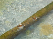 Прорыв канализации. Прорыв канализации произошел из-за коррозии трубы.